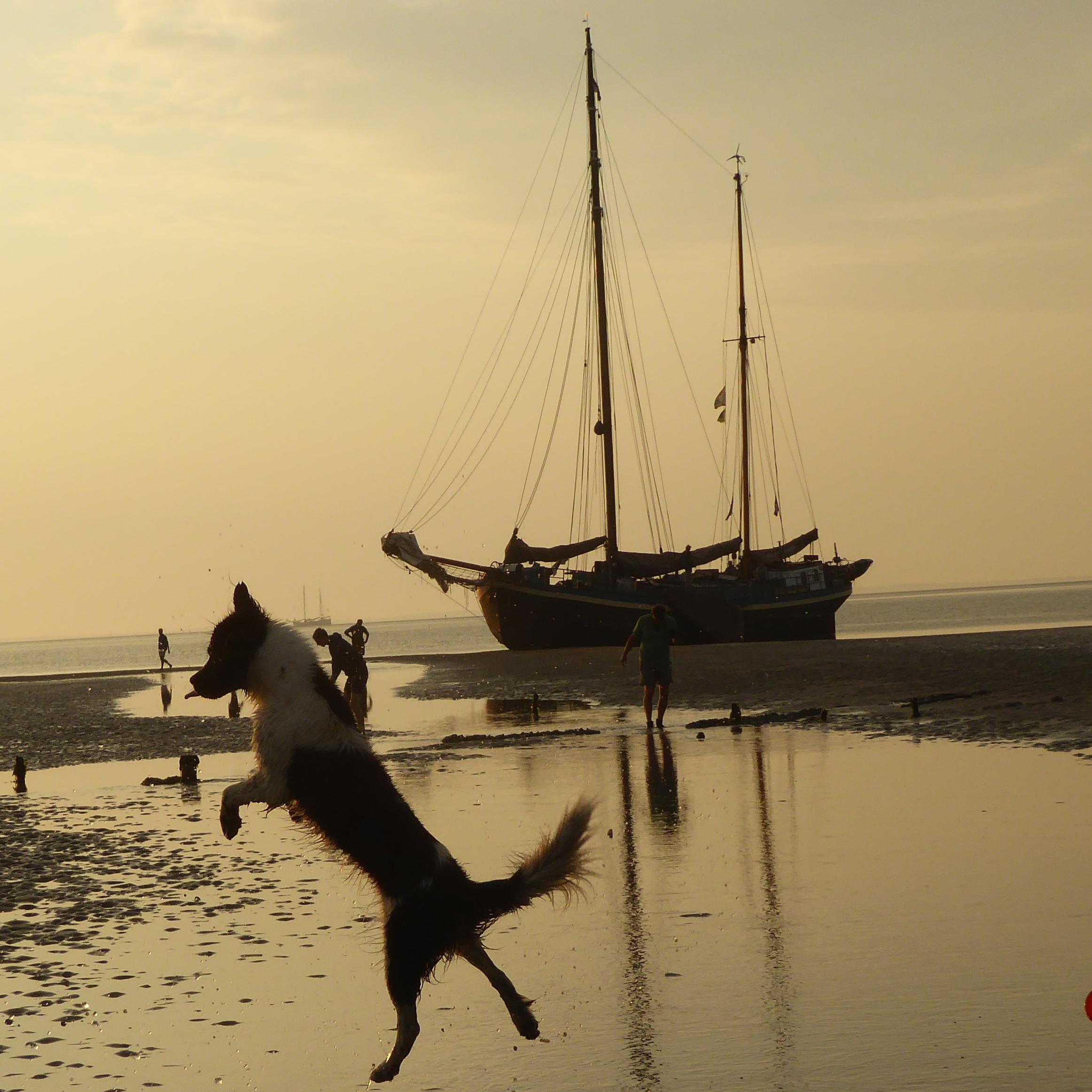 Segelschiff im Wand mit springenden Hund im Vordergrund